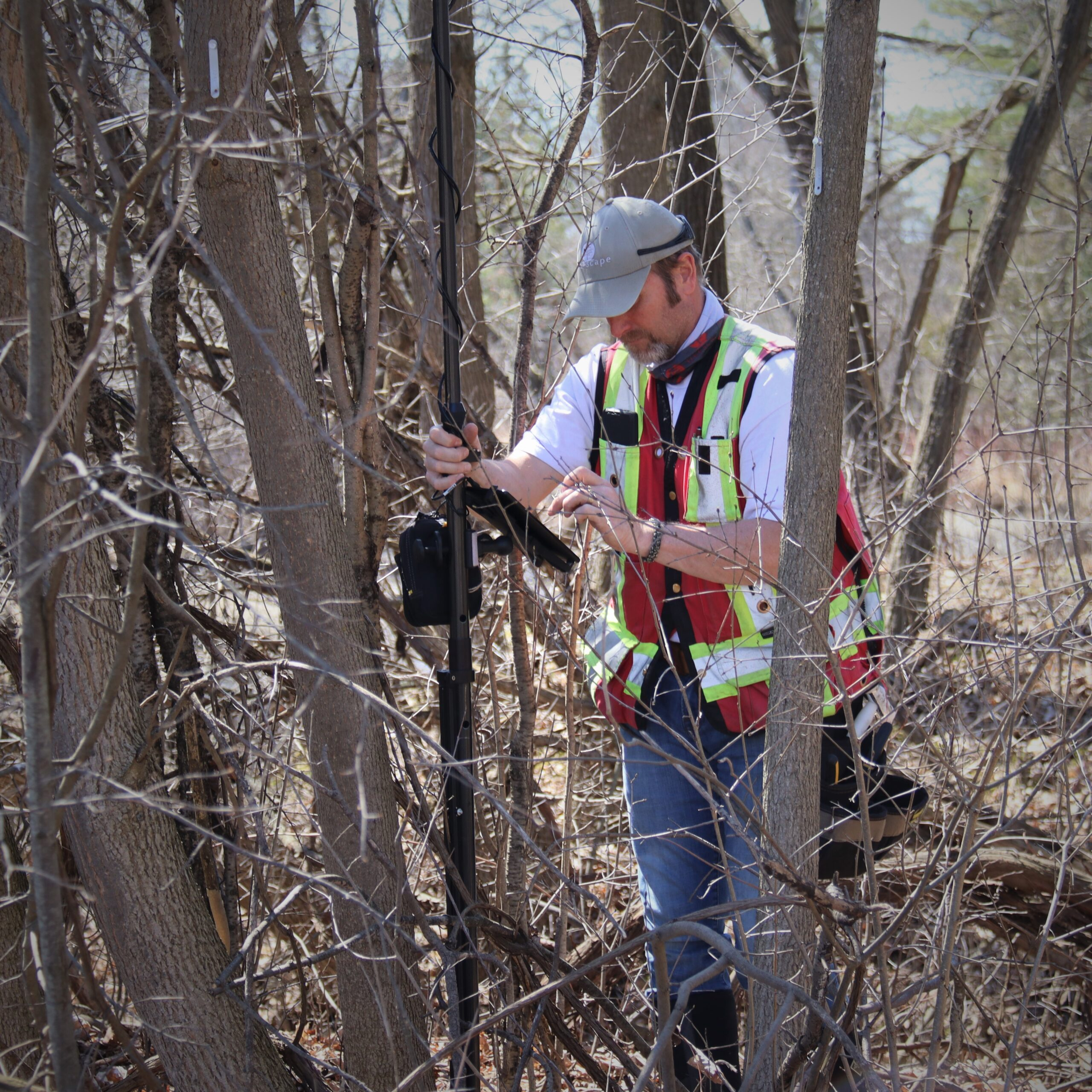 Tree assessments and reports