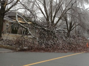 Broken branch falls during ice strom