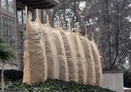 Protect your trees with burlap wraps