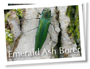 footer_emerald_ash