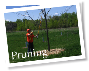 footer_pruning