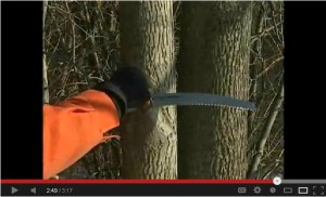 Pruning in winter