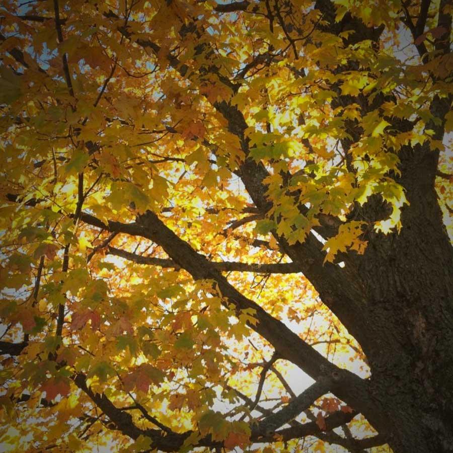 Tree Management Plans