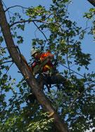 tree_preservation_135